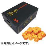 【予約商品】【12月11~13日の配送となります】 愛媛県産 日の丸みかん Mサイズ 3kg 1箱