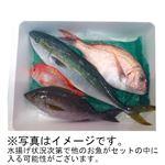 【予約商品】【10月31日の配送となります】 日本海 旬のおさかなセット 中