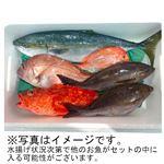 【予約商品】【12月5日の配送となります】 日本海 旬のおさかなセット 大