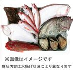 【予約商品】【10月29日~10月31日の配送となります】 福島鮮魚便 おさかなセット 中