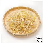 長野県などの国内産 グリーンアイ オーガニック機能性大豆もやし 200g