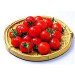 熊本県、愛知県などの国内産 ミニトマト(少量)1パック