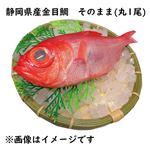 【予約 10/31・11/01配送】 静岡県産 金目鯛 そのまま(丸1尾)
