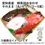 【予約 10/31・11/01配送】 愛知県産 鮮魚詰め合わせ そのまま(丸)セット(3~5尾)