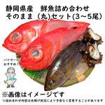 【予約 10/31・11/01配送】 静岡県産 鮮魚詰め合わせ そのまま(丸)セット(3~5尾)