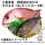 【予約 10/31・11/01配送】 三重県産 鮮魚詰め合わせ そのまま(丸)セット(2~3尾)