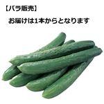 岐阜県などの国内産 きゅうり★ 1本
