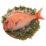 【予約4/17・4/18配送】 三重県産 活〆養殖真鯛 約2kg 1尾