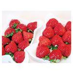 【予約商品】【6日後以降の配送】 福岡県などの国内産 いちご食べ比べセット 4パック入1箱