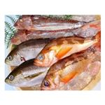 【予約】【6/26(土)配送】 豊洲市場直送のお魚セット 1ケース
