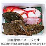 【予約】【10/9(金)~10(土)の配送】房総水揚げ鮮魚詰め合わせボックス(大)
