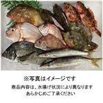 【予約商品】瀬戸内海の旬のおさかなセット(B)【お届け期間:10/9~10/10】16時以降の配送になります