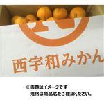愛媛県などの国内産 八協みかん Mサイズ 5Kg入 1ケース
