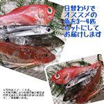 【旬だより予約】 【3枚おろし】鮮魚詰め合わせセット(3~4種)【お渡し日9/6(金)~7(土)】