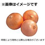 兵庫県 などの国内産 トップバリュたまねぎ(淡路)1袋