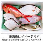 【7/24(金)~25(土)配送】房総水揚げ鮮魚詰め合わせボックス(小)