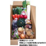 【今おすすめしたい旬の野菜・果物予約】【6日後以降の配送】 お野菜セット 大 1箱