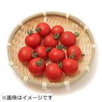 熊本県などの国内産 ミニトマト    1パック