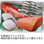 【予約】【1/29(金)~30日(土)配送】銚子水揚げ鮮魚詰め合わせボックス 1箱