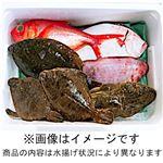 【10/2(金)~3(土)の配送】房総水揚げ鮮魚詰め合わせボックス(大)