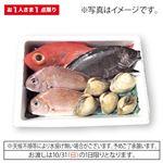 【予約】【10/31の配送】鮮魚詰め合わせBOX 1箱