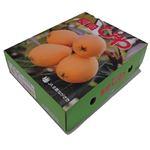【今おすすめしたい旬の野菜・果物予約】【6日後以降の配送】 長崎県産 びわ 250g×4パック入 1箱