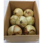 【今おすすめしたい旬の野菜・果物予約】【6日後以降の配送】 熊本県産 たまねぎ(塩たまちゃん)1.5kg入 1箱