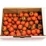 【今おすすめしたい旬の野菜・果物予約】【6日後以降の配送】 高知県 シュガートマト ビアンコ 800g入 1箱