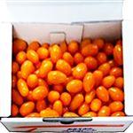 【今おすすめしたい旬の野菜・果物予約】【6日後以降の配送】 茨城県産 スーパーフルーツトマト 1kg入 1箱