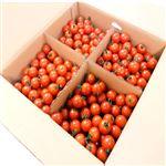 【今おすすめしたい旬の野菜・果物予約】【6日後以降の配送】 愛知県産 ミニトマト(アイコ)1kg入 1箱
