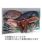 【予約商品】【12月5日の配送となります】 茨城のおさかなセット 大