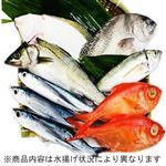 【予約】【6/5(金)~6/6(土)配送】三浦・三崎水揚げ鮮魚 詰合わせボックス(大)