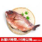 【予約商品】【10/15(金)~10/19(火)の配送】 和歌山県産 活メ真鯛(養殖)1尾 ※16時以降の配送になります