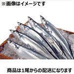 北海道青森県沖太平洋産ほか 生さんま 1尾