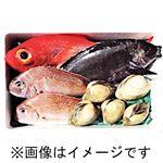 【予約】【3/5(金)~6日(土)配送】大畑鮮魚 おすすめ詰め合わせボックス 1箱