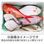 【予約】【8/21(金)~22日(土)までの配送】房総水揚げ鮮魚詰め合わせボックス(小)