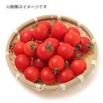 茨城県などの国内産 ミニトマト 300g 1パック