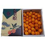 【今おすすめしたい旬の野菜・果物予約】【6日後以降の配送】 宮崎県産 きんかん(たまたま)エクセレント 2Lサイズ 1kg入 1箱