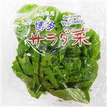 サラダ菜 福岡などの国内産 1袋