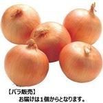 【3/2(火)配送分】玉ねぎ 1個(北海道産他)