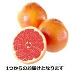グレープフルーツ(ルビー)1玉